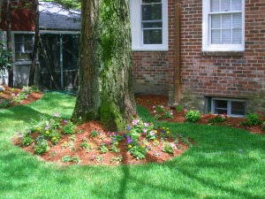 Homes For Sale in Newton MA